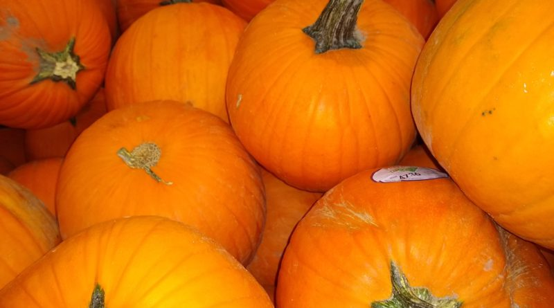 Pick a Pumpkin – All of the Pumpkin Patches and Hayrides in Pittsburgh and the Surrounding Areas