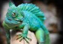 Snakes and chameleons and turtles and more! Reptiles: LIVE!